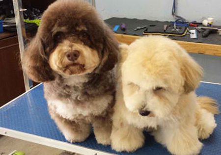 Puppy Love Mobile Dog Grooming