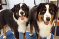 dog-grooming-vic-park-1