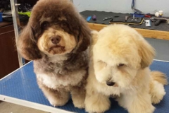 puppy-grooming-1