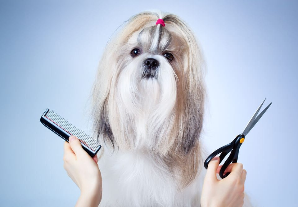 Dog grooming blogs posh pooch posh pooch the cutest dog hairstyles solutioingenieria Images
