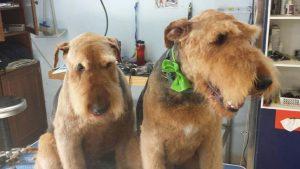Dog Wash Perth, Dog Washing Services