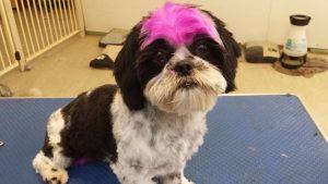 Dog Wash, Dog Wash Services 2, Pet Grooming, Pet Groomer
