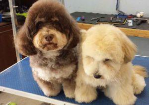 Posh Pooch - Dog Grooming